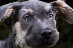 Popularne kosmetyki dla psów – czyli kilka słów o pielęgnacji